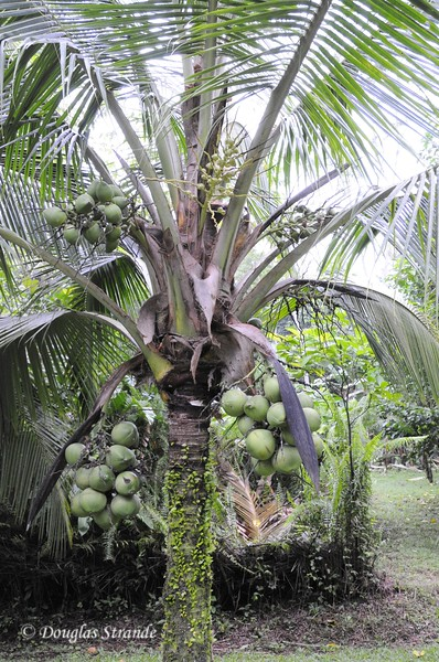 Sarapiqui: botanical gardens