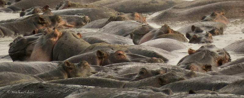 Hippos K-6.jpg