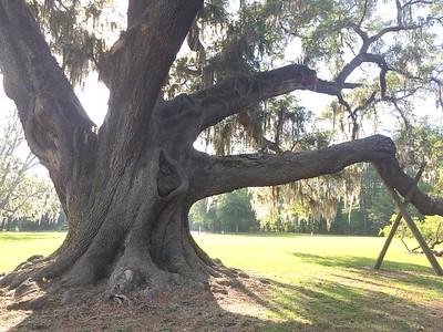 Cellon Tree