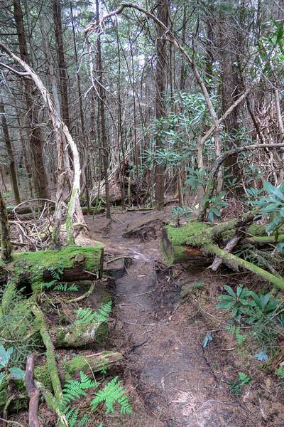 Mountains-to-Sea Trail -- 5,730'