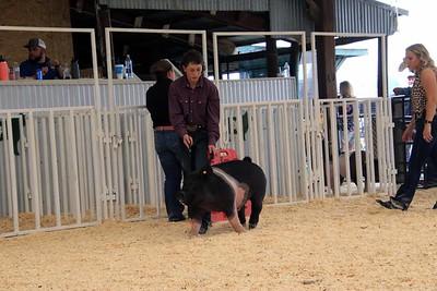 Market Swine 4