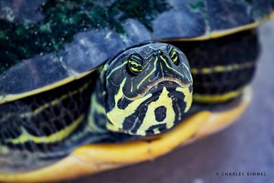 Turtles: 2020