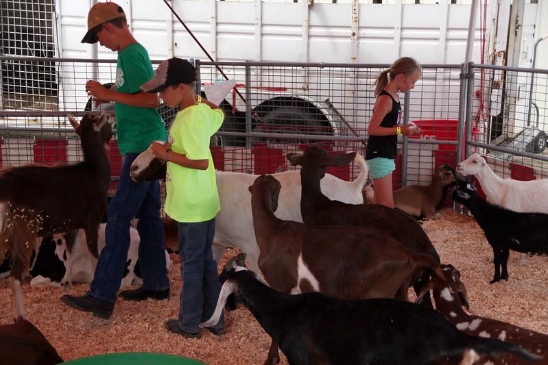 Blain County Fair  Goats to pet left Ryan Meneelye, Gage Skoyeh and Rylin Collins make friends with the petting goats at the Blain County Fair Saturday