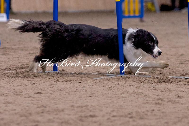 Large dog jumping  1091.jpg