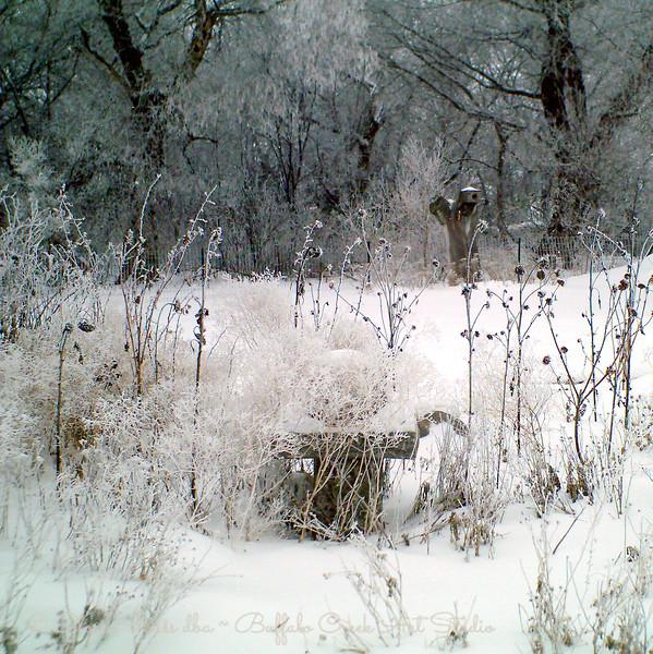 flower garden in winter