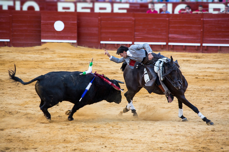 Bullfighting H24.jpg