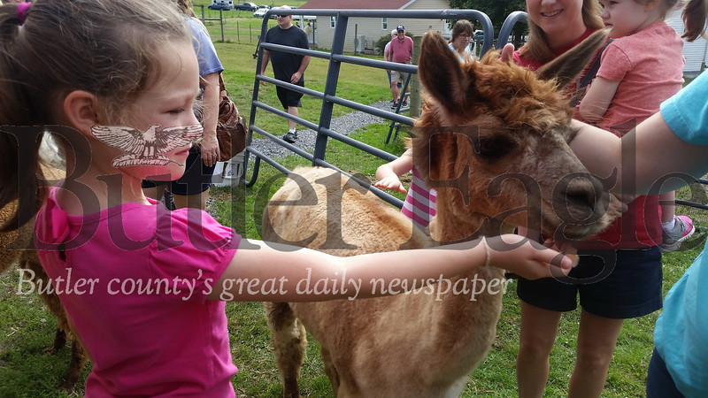 Shannon Koehler, 7, of Franklin Township feeds an alpaca, Bell Kora, on Saturday at Asgard Acres Alpaca Farm in Forward Township. Shannon and her family were among the hundreds who participated in the 2018 Butler County Farm Tour. The event included five farms that produce various products, which people could tour between 10 a.m. and 4 p.m.