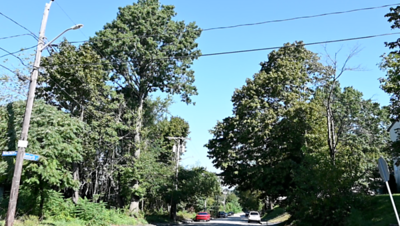 Tree Height on Danforth