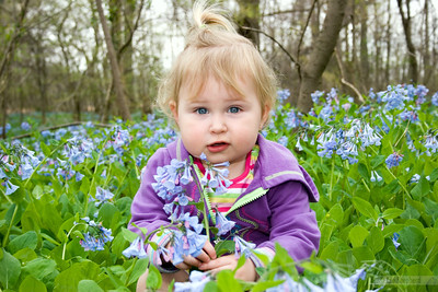 Spring Day in the Bluebells