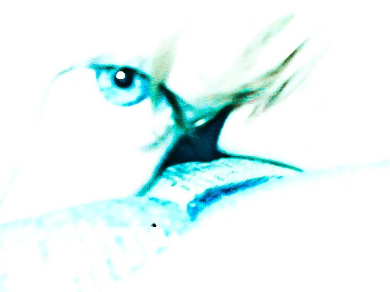 s20110924200301-rabkin-0487.jpg