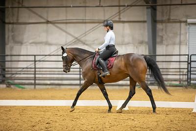Horse 153