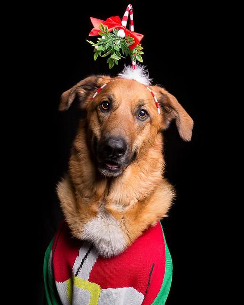 Doghouse Xmas Pawty-1.jpg