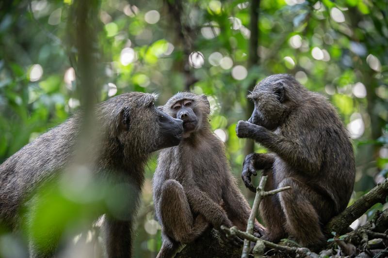 Uganda_T_Chimps-1488.jpg