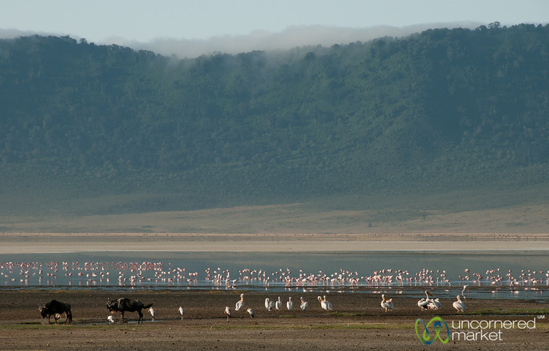 Wildebeest and Flamingos - Ngorongoro Crater, Tanzania