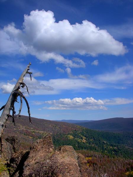 Gearhart Mountain Wilderness Oregon