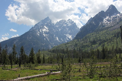 2015 Yellowstone