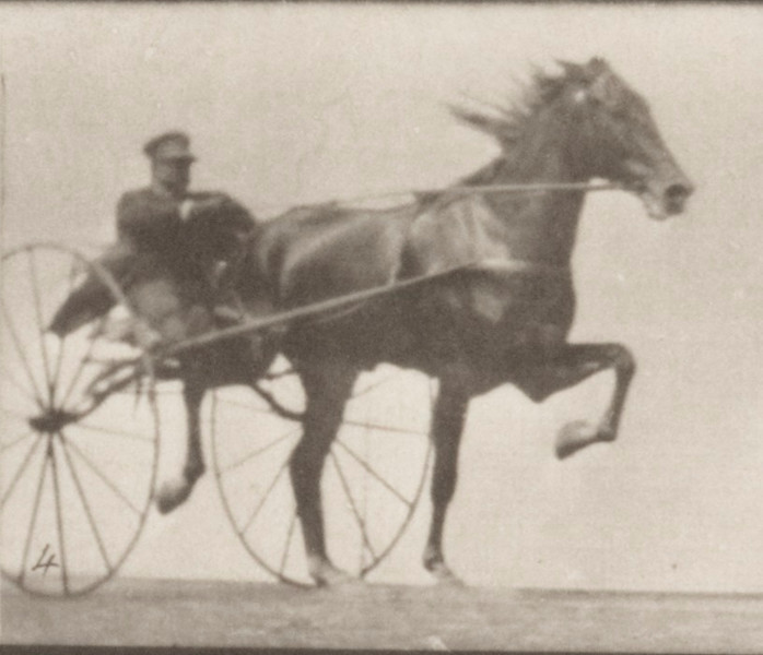 Horse Nellie Rose trotting, harnessed to sulky with driver