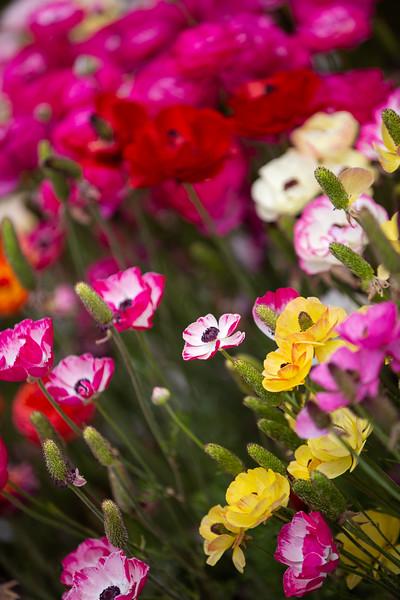 Spring Flowers B-424.jpg