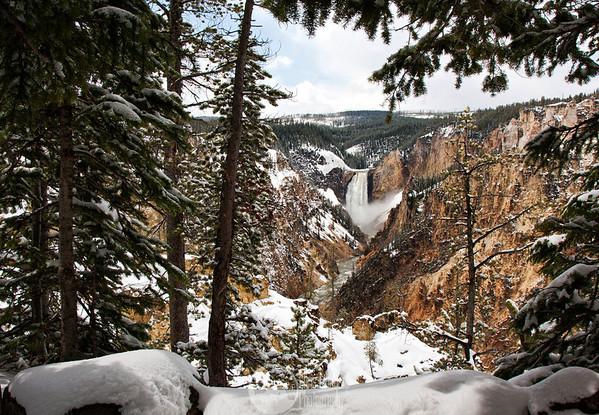 Yellowstone 5-2011