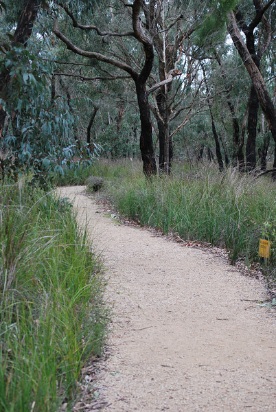 Path from Stringbark picnic area to Trig Point 1.JPG
