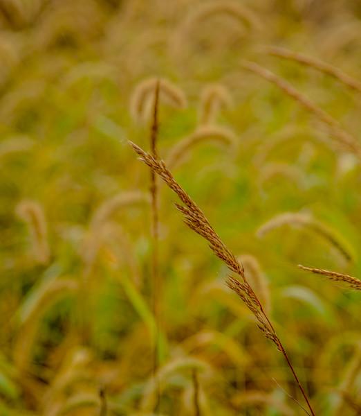 Prairie  48