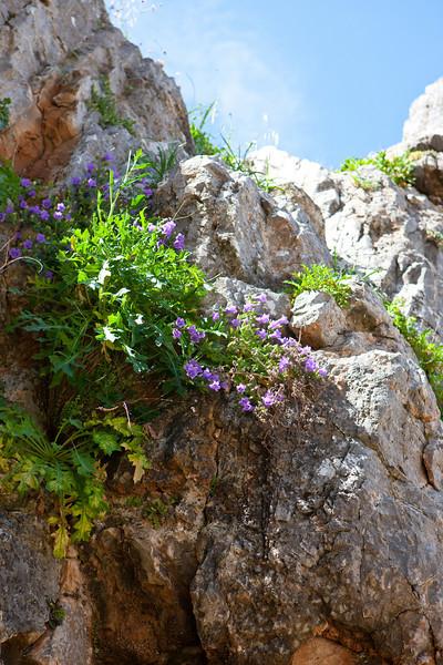 Greece-3-29-08-31005.jpg