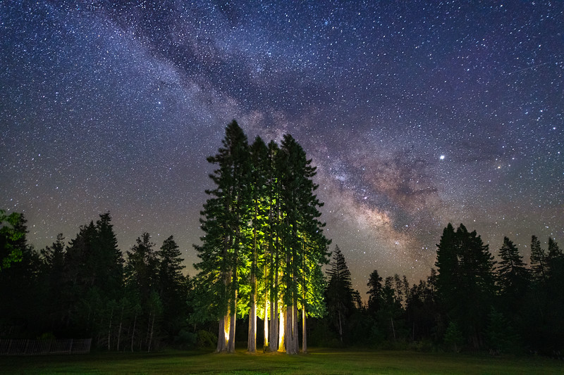 Bertolli Redwoods & Milky Way, Gualala, CA