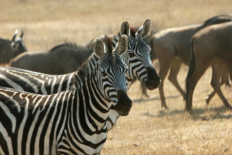 Tanzania - 28.jpg