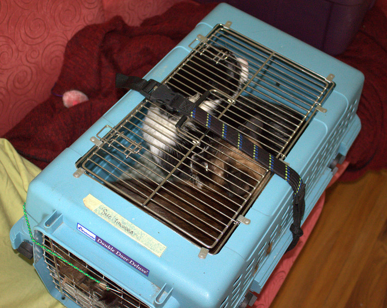 The boys, squished into their carrier to go to summer camp at Kumiko's.