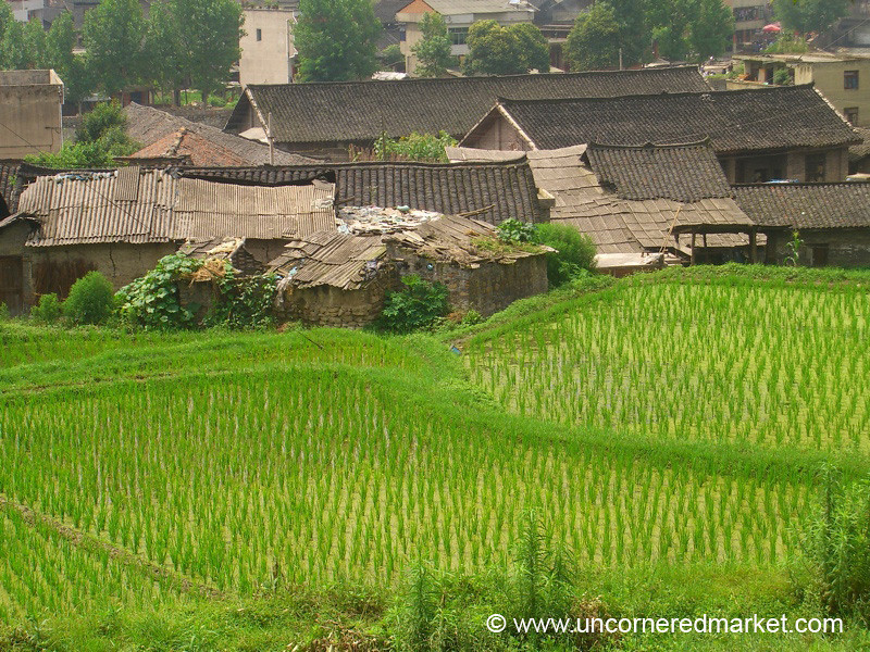 Chong'an Rice Fields and Old Homes - Guizhou Province, China