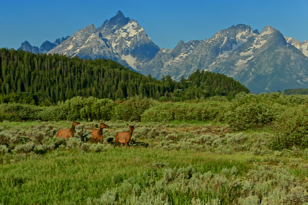 Tetons Elks Club