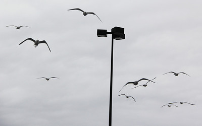 Seagulls, H.T. Commons, Hometown (2-21-2014)