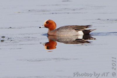 2011 Birding