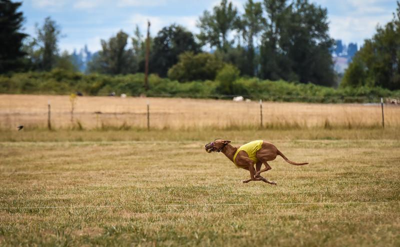 pharoahhound-19.jpg