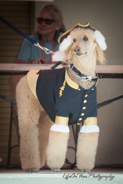 Yankee Doodle Dog parade 2016