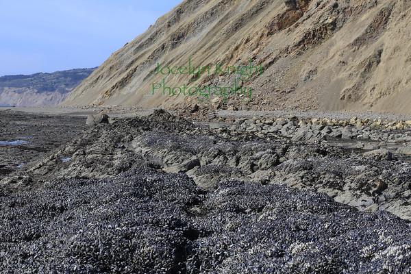 Marine Biology RCA Tidepools/Agate Beach 3/16/19