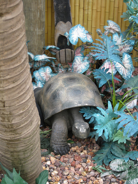 This turtle statue was by the changing rooms.