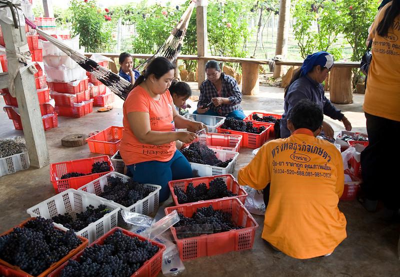 grapeworkers.jpg