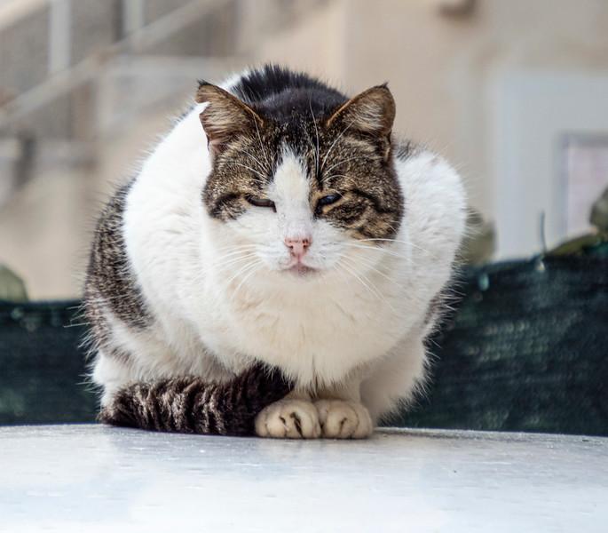 Split_Cat-1.jpg