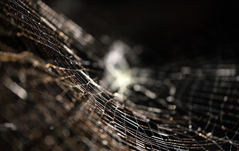 Spider Webs - Saraceno-3.jpg