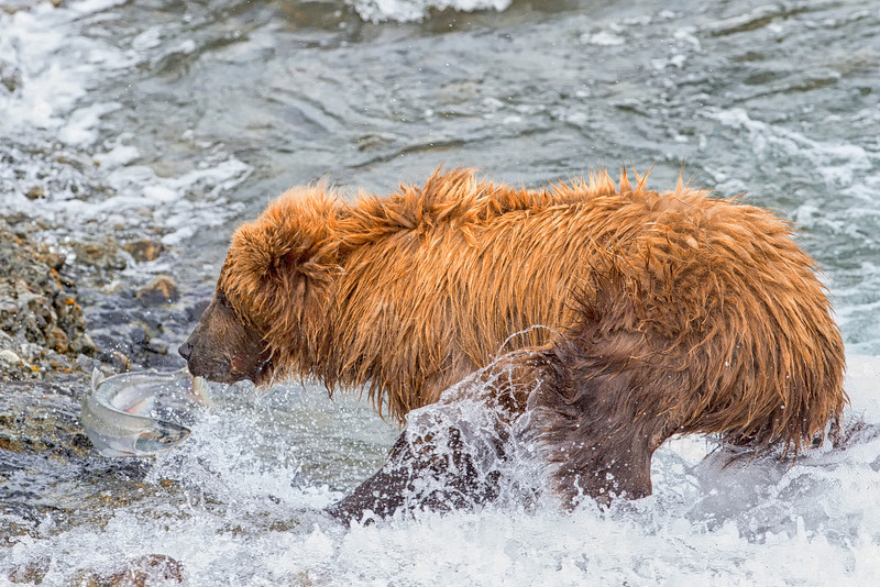 Alaska_2013_FH0T4897.jpg