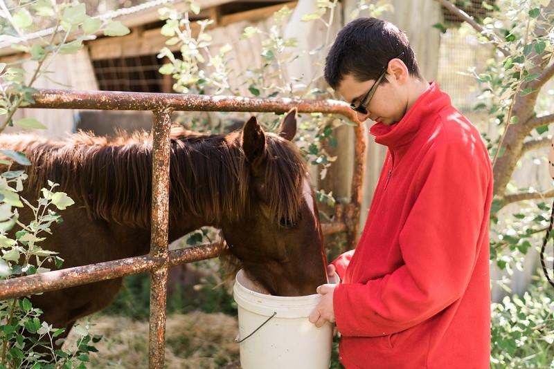 Man feeding a horse