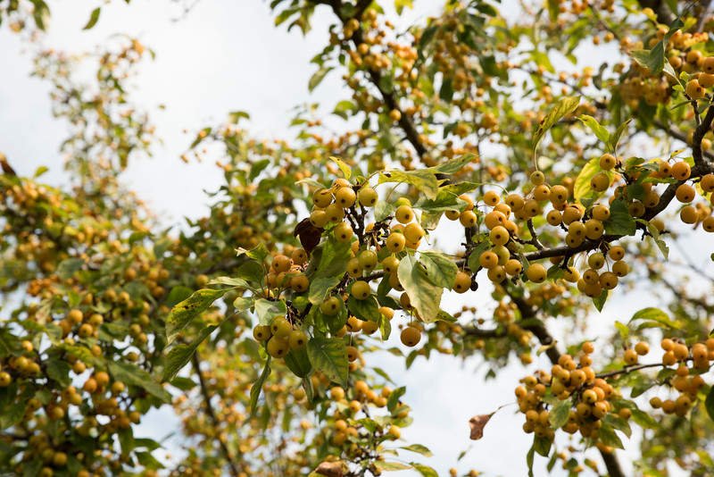 Chicago Botanic Garden 037.jpg