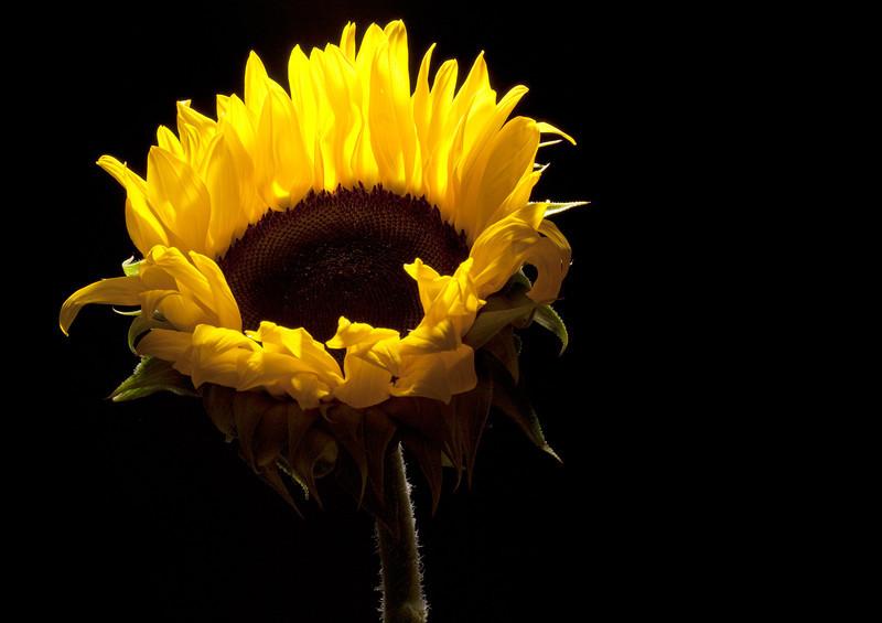 Flaming Flower_4977438749_o_8179008553_o.jpg