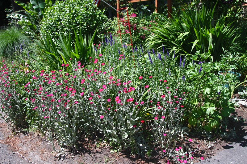 I adore these sage and cerise plants