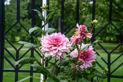 August in Kaufman Gardens