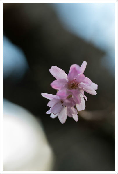 October Cherries-0790.jpg