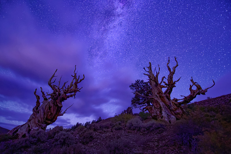 Milky Way Over Bristlcone Pines