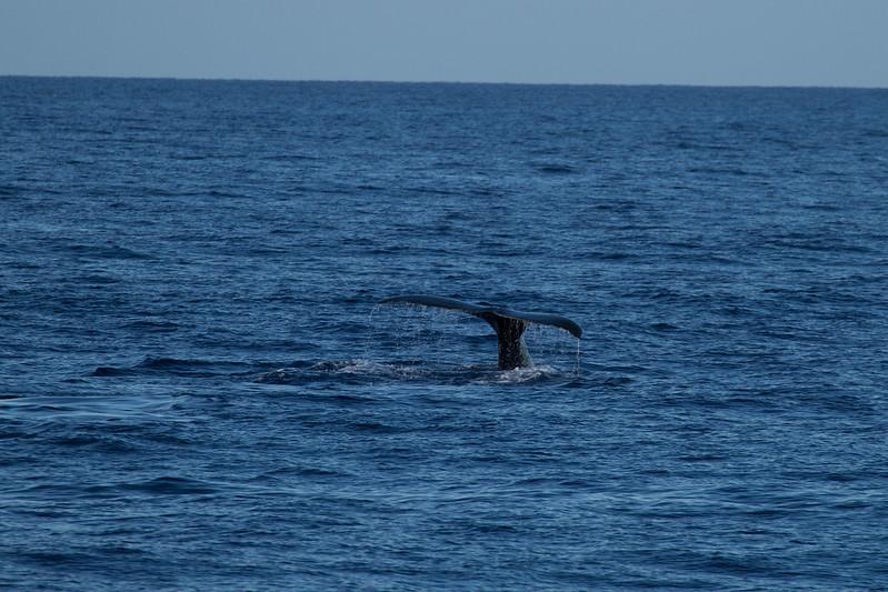 Hawaii2012-710.jpg