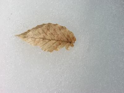 Leaves (General)